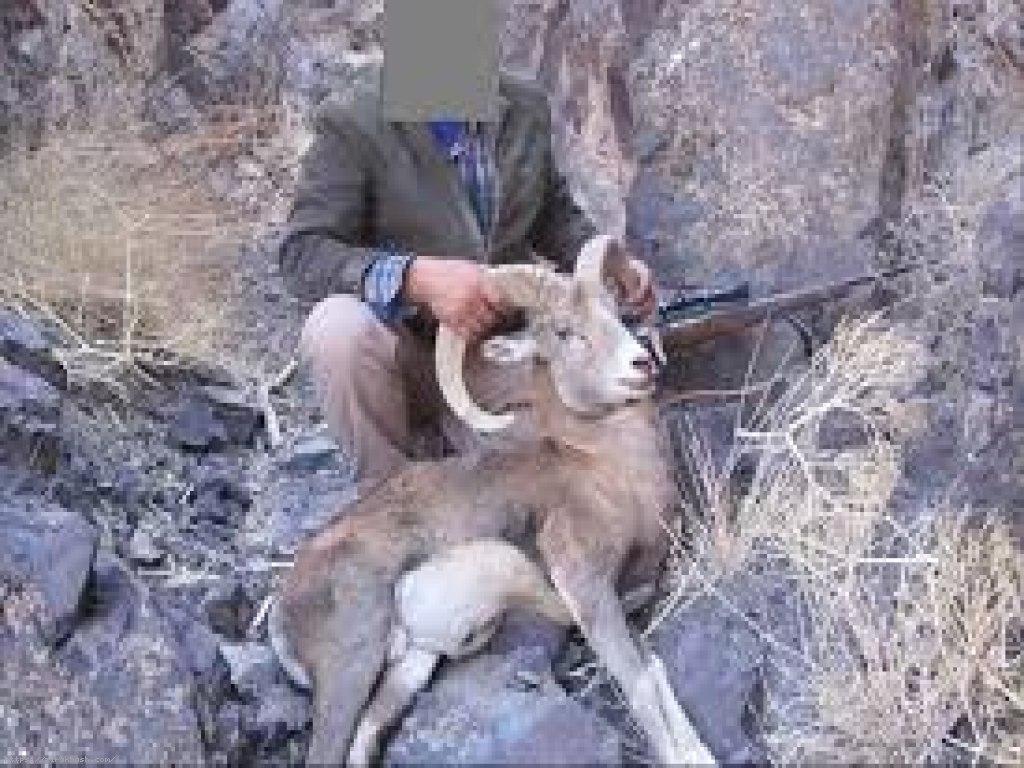 شکار,شکارچی پرنده های وحشی,شکار در کلات,اداره محیط زیست,احدث آبشخور,حیات وحش,مناطق حفاظت شده و شکار ممنوع